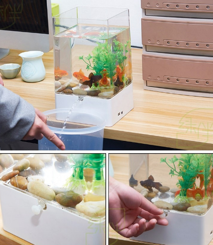 ecological fish tank aquarium