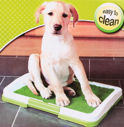 how to potty train a puppy fast