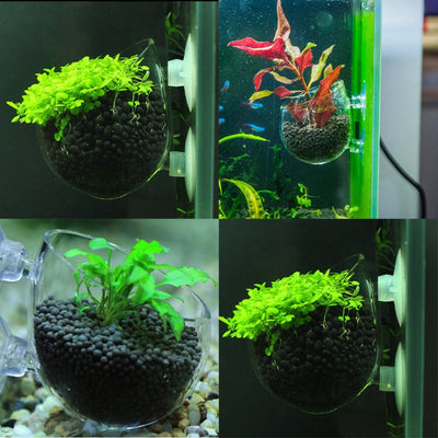 Mini Crystal Glass Pot Fish Tank - GeniusSo