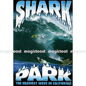 Shark Park - Surf DVD-Magic Toast