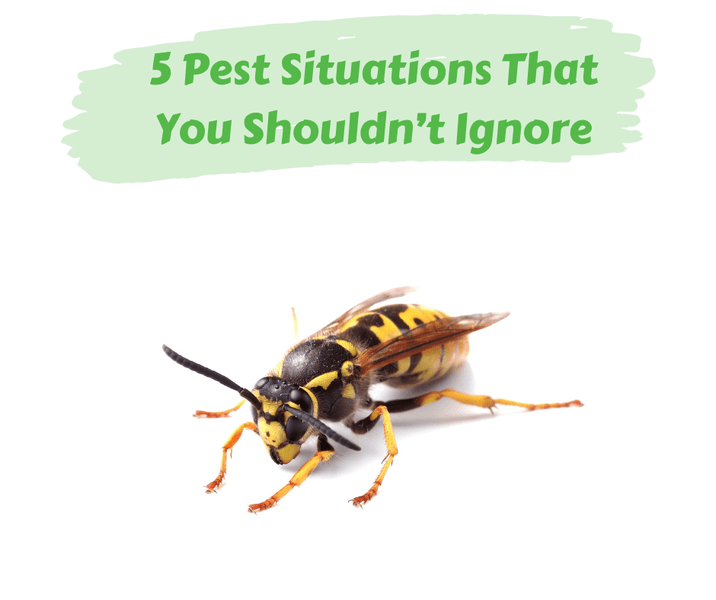 5 Pest Situations That You Shouldn't Ignore