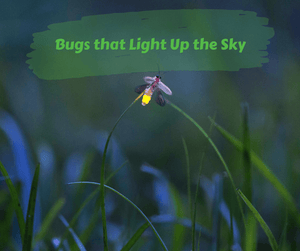 Bugs that Light Up the Sky