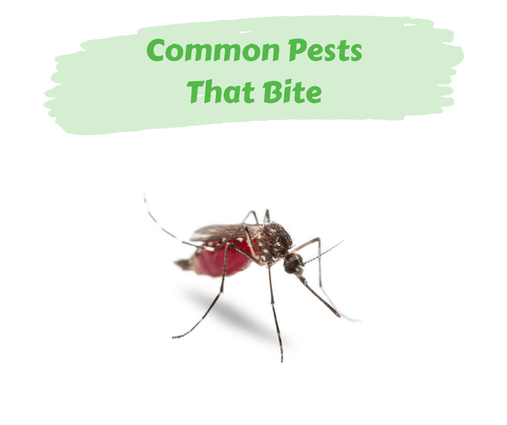 Common Pests That Bite