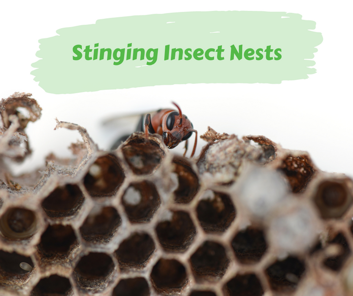 Stinging Insect Nests