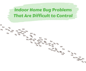 Indoor Home Bug Problems That Are Difficult to Control