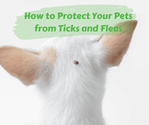 How to Protect Your Pets from Ticks and Fleas