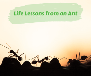 Life Lessons from an Ant