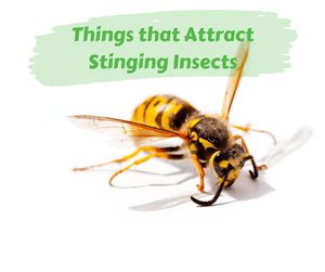 Things that Attract Stinging Insects