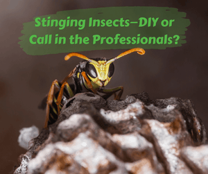 Stinging Insects—DIY or Call in the Professionals?