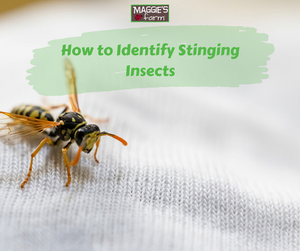 How to Identify Stinging Insects