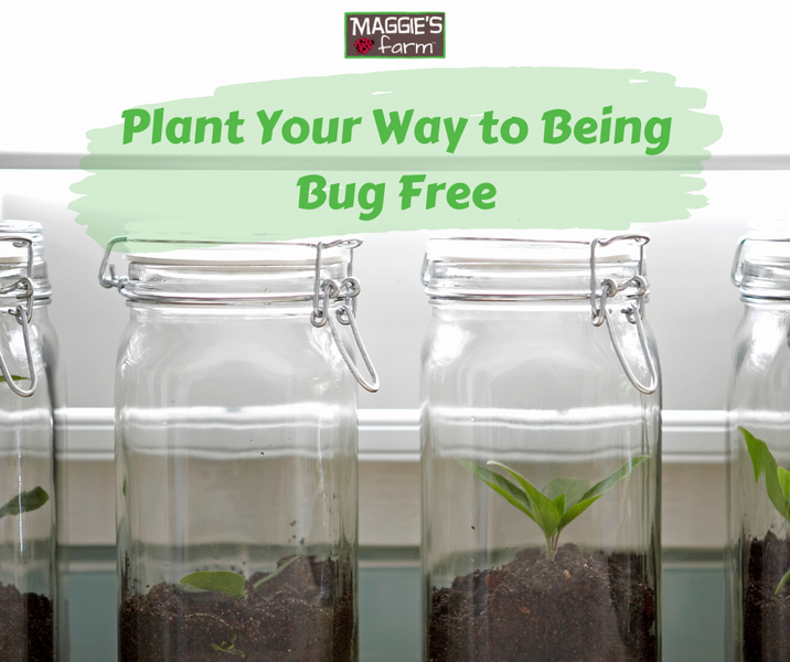 Plant Your Way to Being Bug Free
