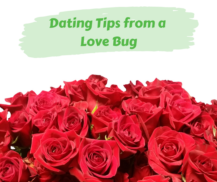Dating Tips from a Love Bug