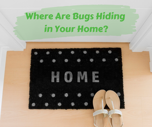 Where Are Bugs Hiding in Your Home?