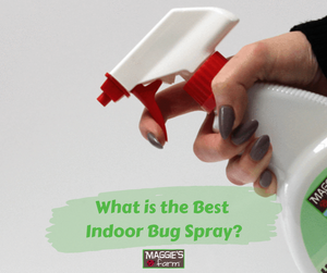 What is the Best Indoor Bug Spray?