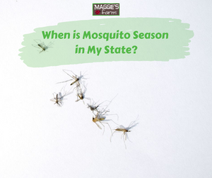 When is Mosquito Season in My State?
