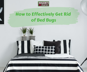 How to Effectively Get Rid of Bed Bugs