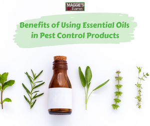 Benefits of Using Essential Oils in Maggie's Farm Pest Control Products