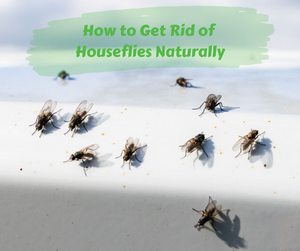 How to Get Rid of Houseflies Naturally