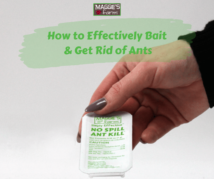 How to Effectively Bait and Get Rid of Ants