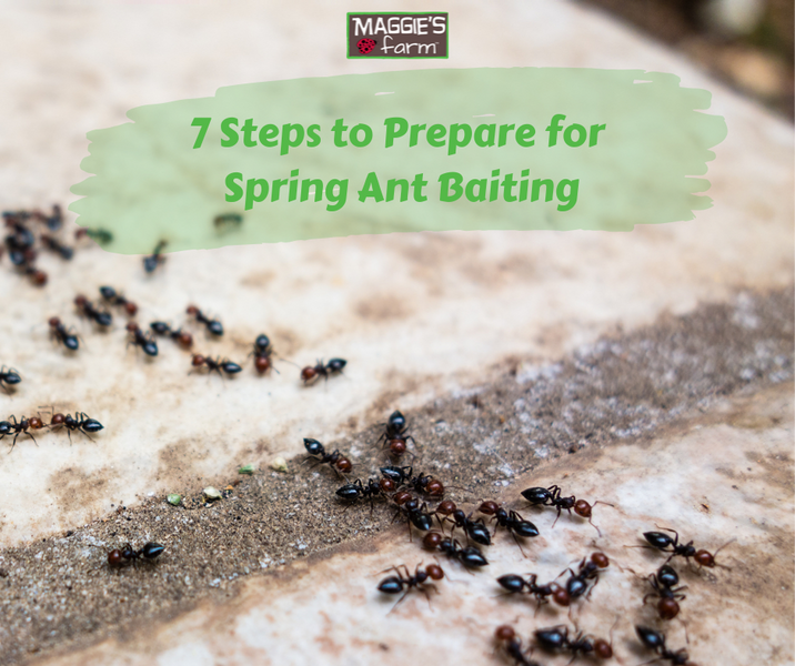 7 Steps to Prepare for Spring Ant Baiting