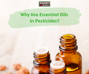 Why Use Essential Oils in Pesticides?