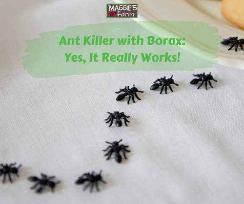 Ant Killer With Borax Yes It Really Works Maggie S Farm