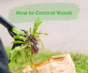 How to Control Weeds: Natural Solutions