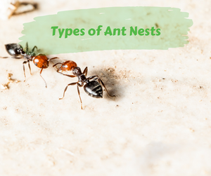 Types of Ant Nests