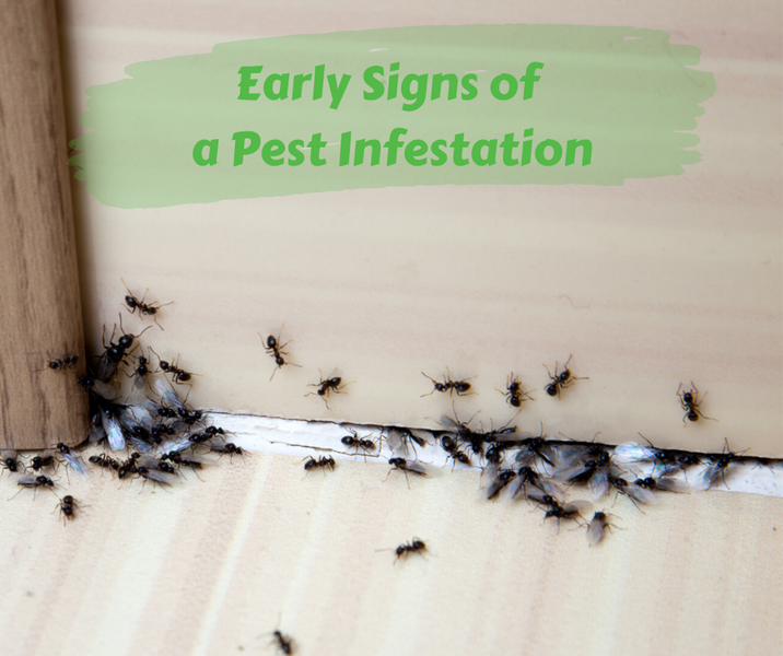 Early Signs of a Pest Infestation