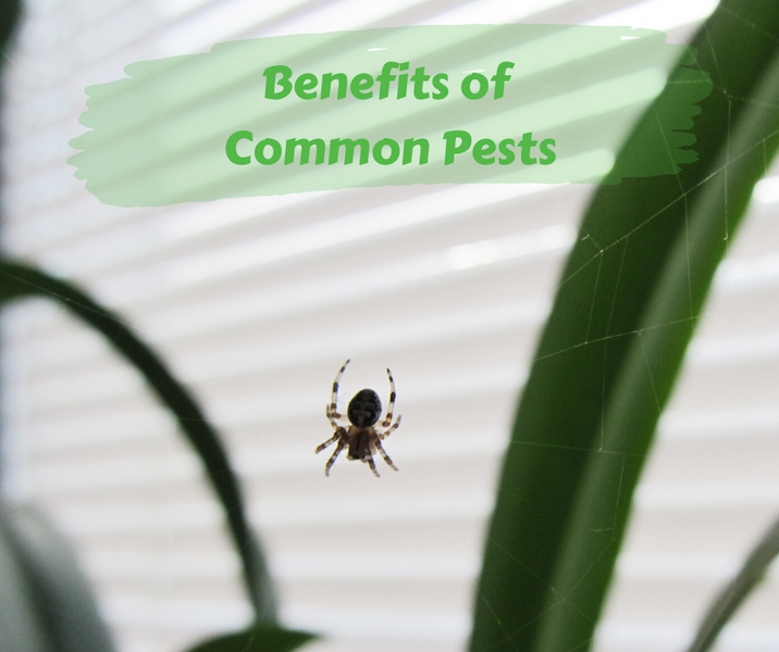 Benefits of Common Pests