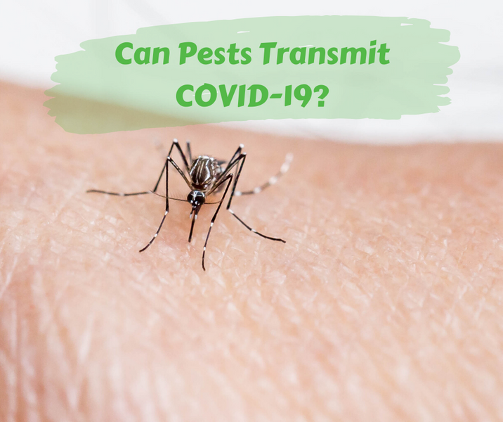 Can Pests Transmit COVID-19?