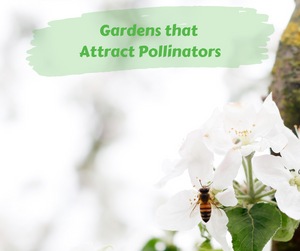 Green Living: Gardens that Attract Pollinators