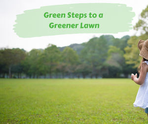 Green Living: Green Steps to a Greener Lawn