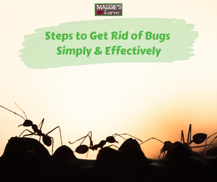 Steps to Get Rid of Bugs Simply and Effectively