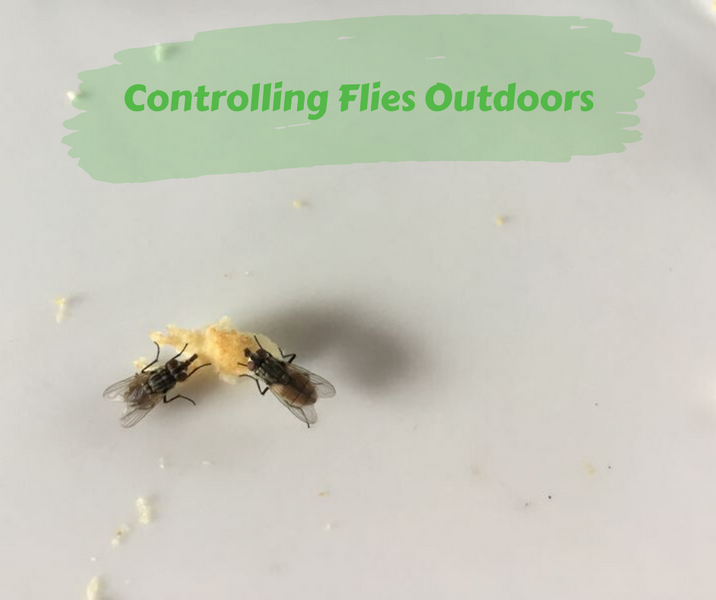 Controlling Flies Outdoors