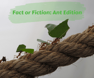 Fact or Fiction: Ant Edition