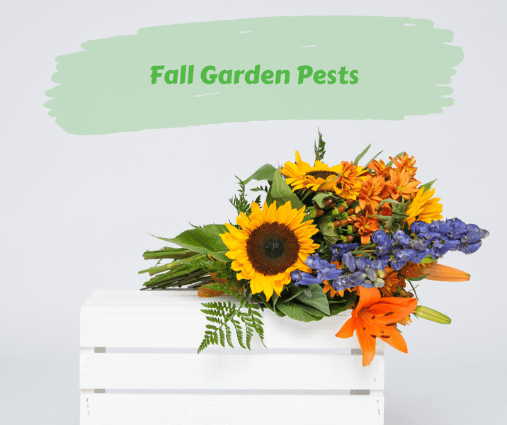 Fall Garden Pests