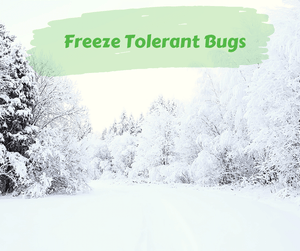 Freeze Tolerant Bugs