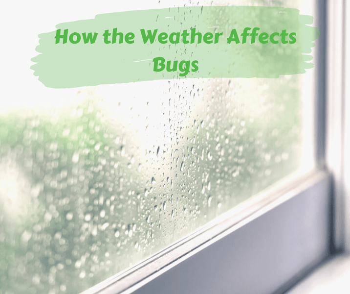 How the Weather Affects Bugs
