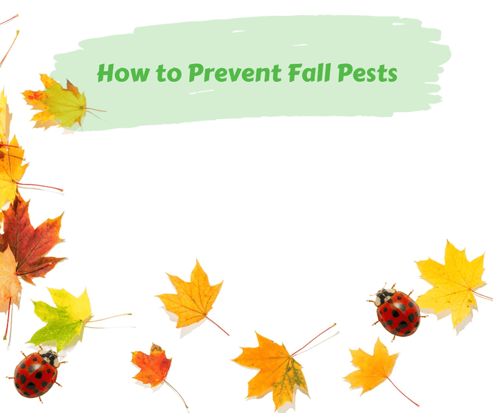 How to Prevent Fall Pests