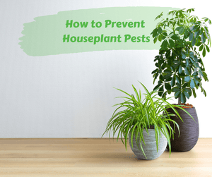 How to Prevent Houseplant Pests