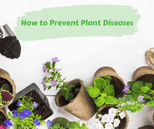 How to Prevent Plant Diseases