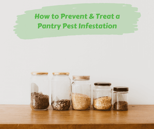 How to Prevent & Treat a Pantry Pest Infestation