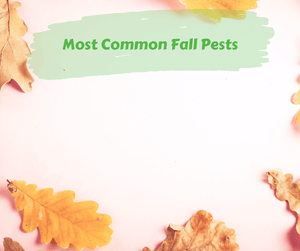 Most Common Fall Pests
