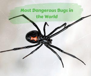 Most Dangerous Bugs in the World