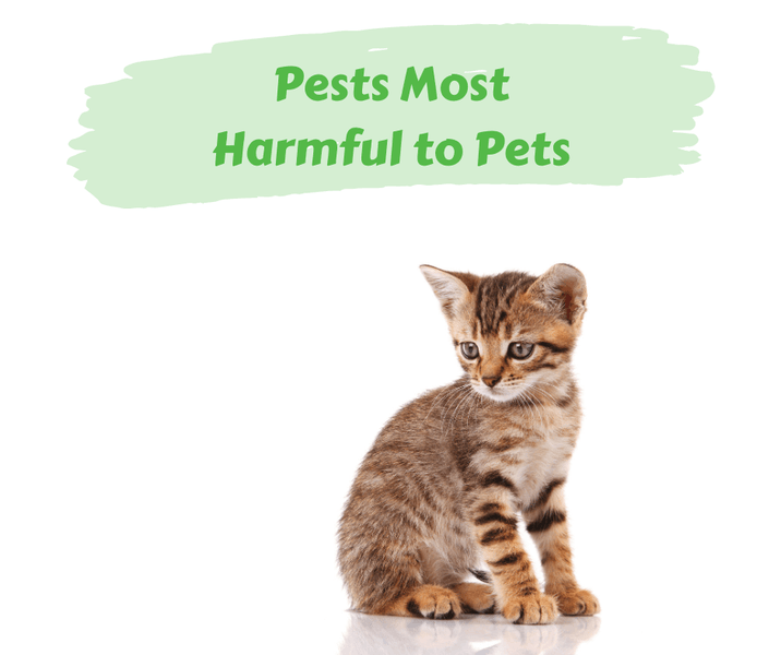 Pests Most Harmful to Pets