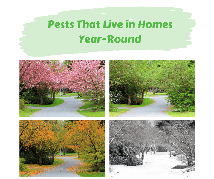 Pests That Live in Homes Year-Round