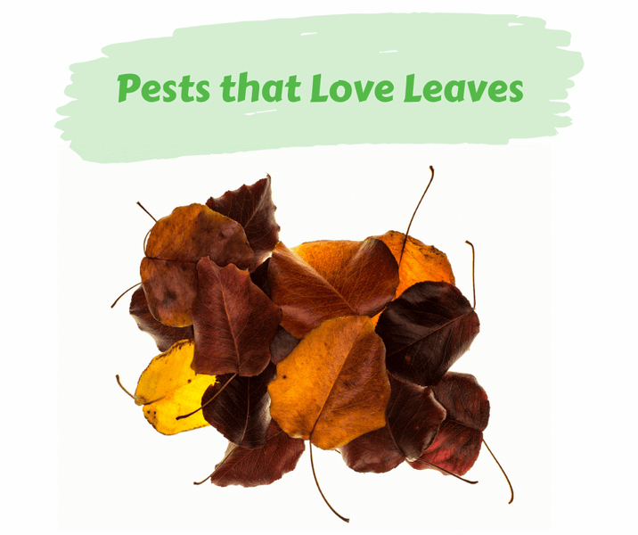 Pests that Love Leaves