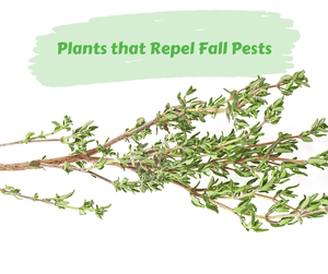 Plants that Repel Fall Pests