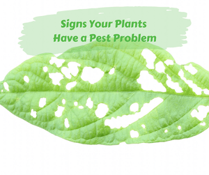 Signs Your Plants Have a Pest Problem